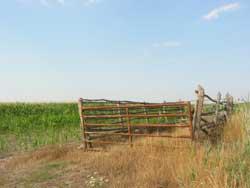 Les cultures de maïs ont remplacé les prairies