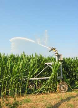 Irrigation du maïs dans la plaine bordière du marais